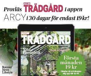 Provläs Allt om Trädgård i appen ARCY i 30 dagar för endast 19 kr!